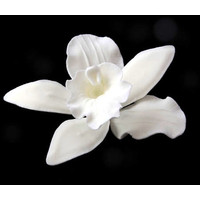 Cattleya Orchid White 75-80mm (Box 16)