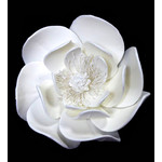 Giant Magnolia 100mm (Box 5)