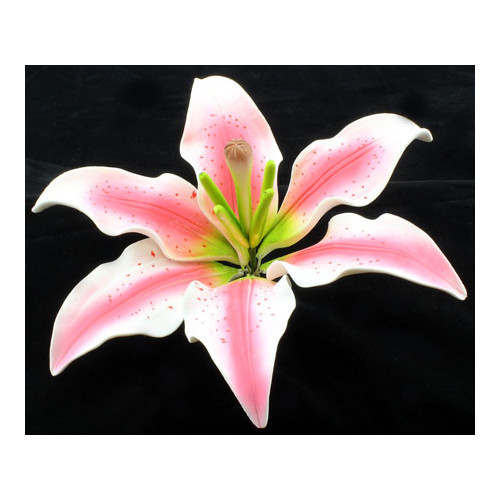 Tiger Lily Pink Premium 160mm