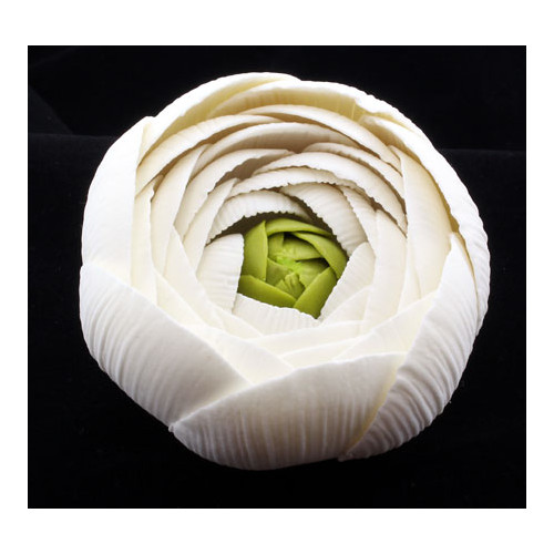 Ranunculus Rose White Medium 50mm (Box 12)